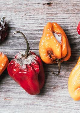 Shelf life testing mouldy peppers