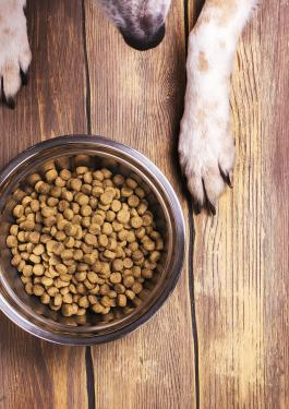Pet food dog paws