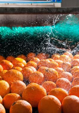 Microbiological Validation Studies Spray Orange